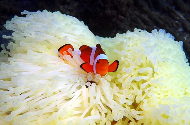 サンゴ再生プロジェクト